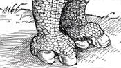 Die Rhinozeros-Füße nach Dürer