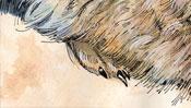 Aquarell vom Hinterlauf des Hasen