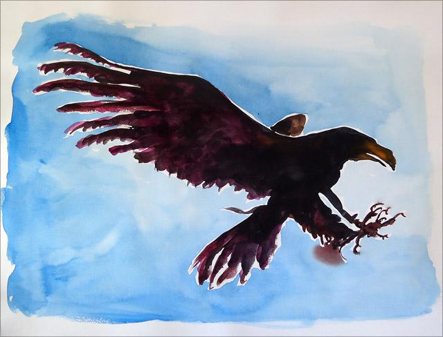 Adlerkrähe
