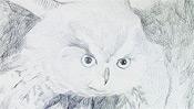 Augen des Uhus