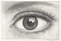 Auge Zeichnung 2