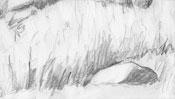 Bleistiftzeichnung Grasbüschel