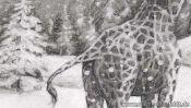 Bleistiftzeichnung Griaffe im Schnee (Detail 2)