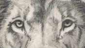 Bleistiftzeichnung: Augen des Löwen (Detail 1)