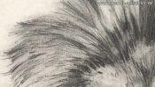 Bleistiftzeichnung: Die Mähne des Löwen (Detail 3)