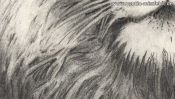 Bleistiftzeichnung: Die Barthaare des Löwen (Detail 4)
