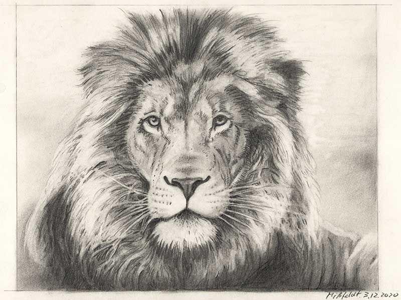Bleistiftzeichnung Löwe (2. Version)