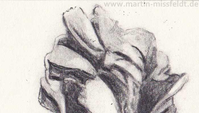 Bleistiftzeichnung Tulpe (Detail 1)