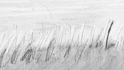 Bleistiftzeichnung Gras