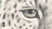 Leopard Tiere Zeichnen (Detail 1)