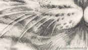 Leopard Tiere Zeichnen (Detail 4)