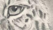 Leopard Tiere Zeichnen (Detail 5)