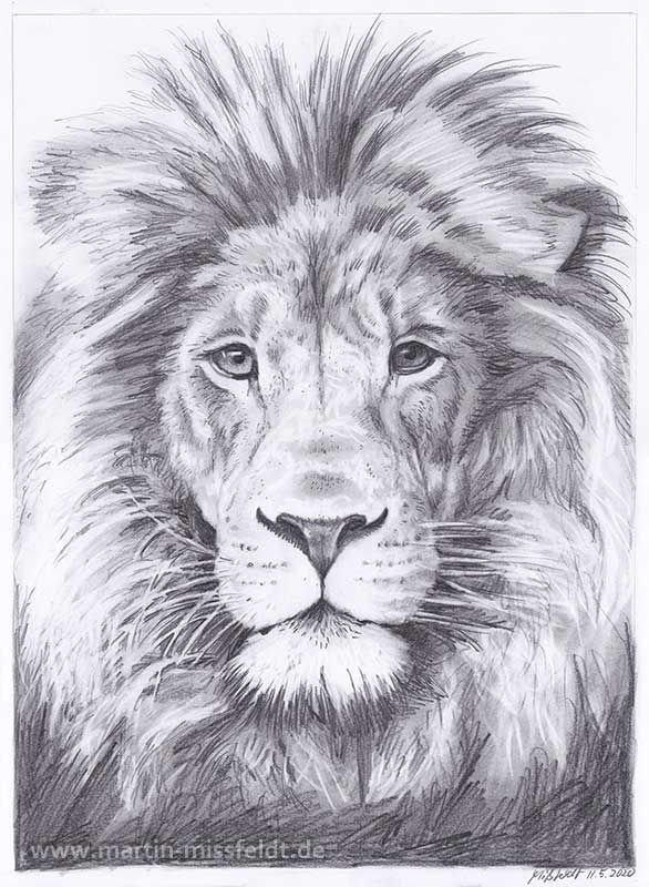Löwenkopf (realistisch Zeichnen)