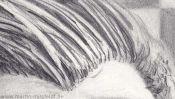 Haare zeichnen, Portraitzeichnung (Detail 3)