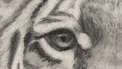 Das Auge des Tigers, Zeichnung Detail 2
