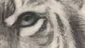 Auge des Tigers, Zeichnung Detail 3