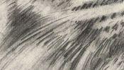 Schnurrhaare des Tigers, Zeichnung Detail 5