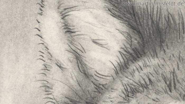 Wolf Bleistiftzeichnung (Detail 1)
