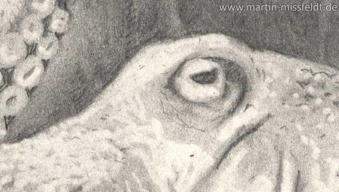 Zeichnung: Auge des Kraken (Detail 1)
