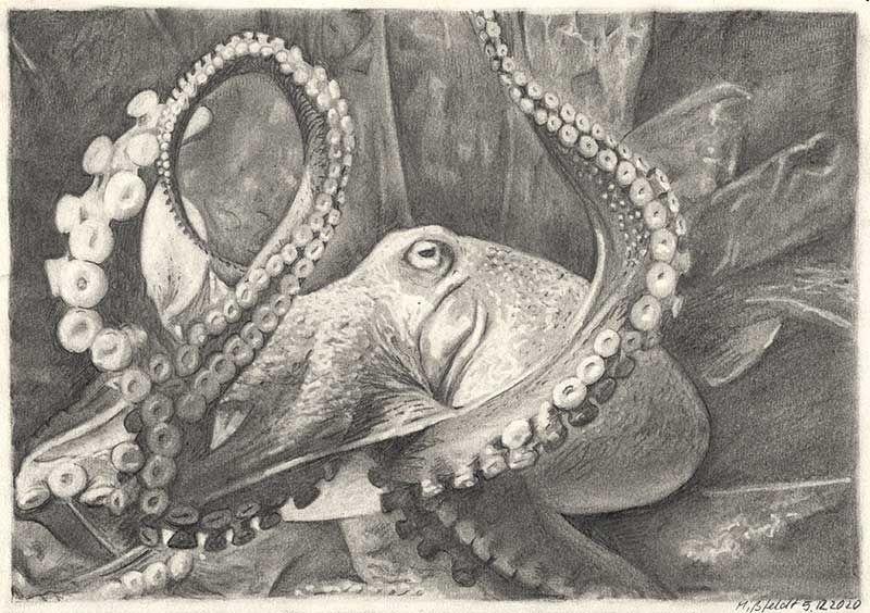 Zeichnung Krake