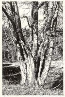 Baum im Lobetal (Brush-Pen Zeichnung)