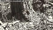 Brandenburger Waldboden (Detail 4)