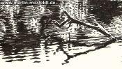 Gamensee Bei Tiefensee (Detail 4)