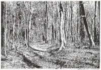Landschaftszeichnung: Wald beim Kloster Chorin