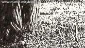 Massiger Baumstamm, Schwarz-Weiß Zeichnung (Detail 2)