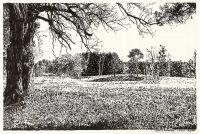 Lobetal In Brandenburg, Landschaftszeichnung