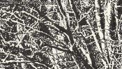 Lobetal Waldrand (Zeichnung) (Detail 1)