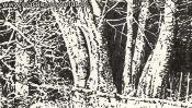 Lobetal Waldrand (Zeichnung) (Detail 3)