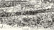 Lobetal Waldrand (Zeichnung) (Detail 5)