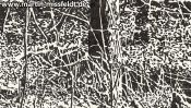 Wald bei Chorin II (Detail 2)