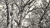 Wald bei Chorin II (Detail 3)