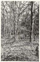 Wald bei Chorin II (Tusche-Zeichnung)
