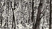 Bäume im Wald (Detail 2)