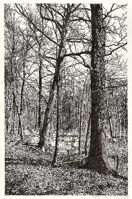 Wald bei Chorin, Brush-Pen-Zeichnung