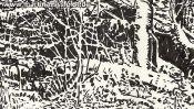 Wald Im Lobetal (Naturzeichnung) (Detail 1)