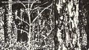 Wald Im Lobetal (Naturzeichnung) (Detail 2)