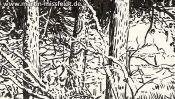 Wald Im Lobetal (Naturzeichnung) (Detail 4)