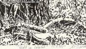 Wald Im Lobetal (Naturzeichnung) (Detail 5)
