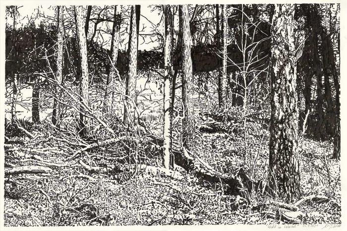 Wald im Lobetal (Naturzeichnung)