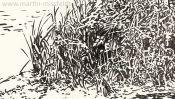 Wukensee (Grafik, Brush-Pen-Zeichnung) (Detail 4)