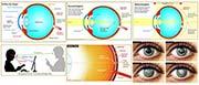 Infografiken: Auge und Sehen