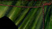 Das Seil vor dem grünen Vorhang