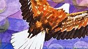 Fliegender Adler (Aquarell) - Detail 1