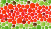Rote und grüne Punkte, Balken