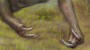 Krallen des Allosaurus