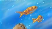 Goldfische schwimmen am Riff